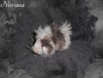 Conejillo de Indias - (3 meses)