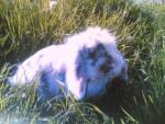 Conejo - (3 años)