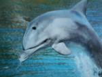 Delfín - Macho (3 años)