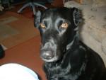 Perro - (12 años)