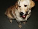 Perro - Macho (9 meses)