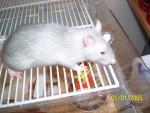 Rata - (1 año)